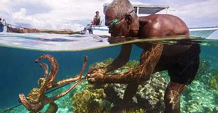 Traditional Octopus Fishing in Rodrigues