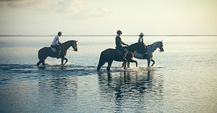 Secluded Horse Riding on the Riambel Beach