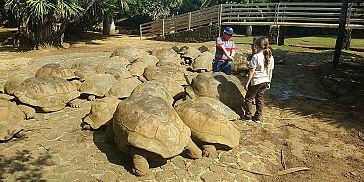 Parc Crocodile Et Tortues Gantes Rserve Naturelle