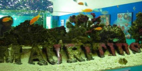 aquarium de l ile maurice vacances maurice