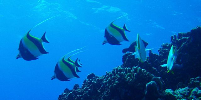 PADI Discovery Initiation diving in mauritius (10)