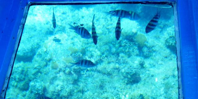Glass bottom blue bay mauritius