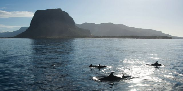 Catamaran west coast dolphins cruise mauritius (1)