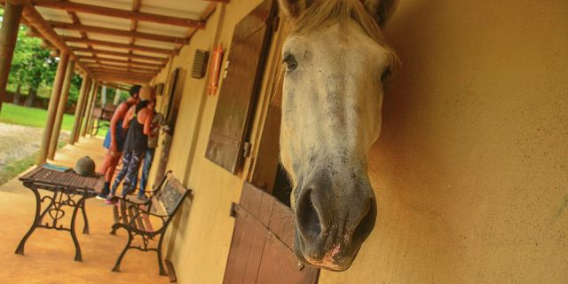 Horse riding excursion (9)