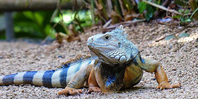 Crocodile Giant Tortoises Park Nature Reserve 7