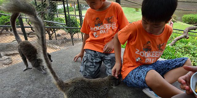 Zookeeper for a day kids package at casela park (1)