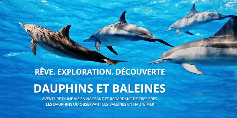 Activit s avec les dauphins et les baleines nager avec for Nager avec les dauphins nice