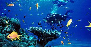 plonger a l ile maurice