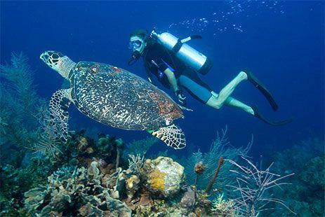 Cours de plongée  Ile Maurice  PADI et CMAS  Vacances Maurice