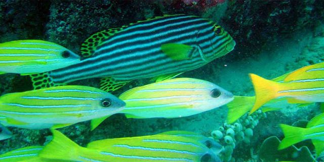 PADI Discovery Initiation diving in mauritius (9)