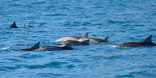 Catamaran west coast dolphins cruise mauritius (5)