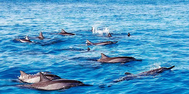 Swimming with dolphins mauritius (2)