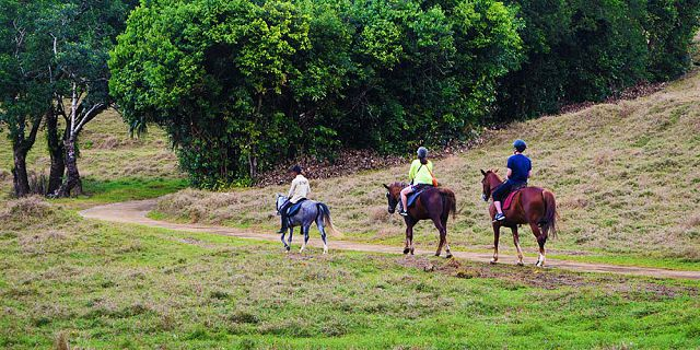 Horse riding excursion and quad biking (10)