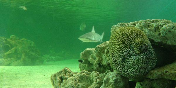 aquarium ile de 28 images l aquarium de st gilles les bains ile de la r 233 union