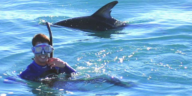Dolphins discovery trip mauritius