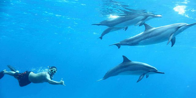 Exclusive day package swimming with dolphins lunch quad (2)