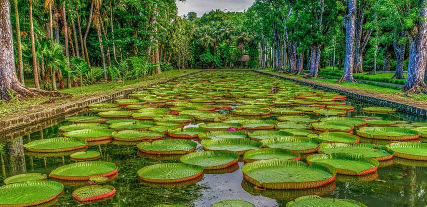 Le jardin botanique sir seewoosagur ramgoolam ile maurice for Bal des citrouilles jardin botanique